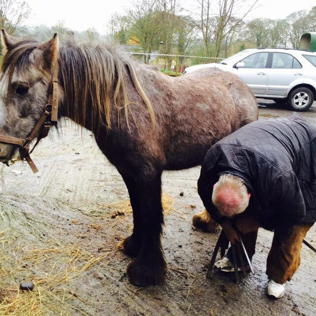 Donate Farrier Fees (dressing-pare and file)