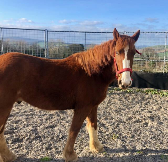Ponies for Adoption from My Lovely Horse Rescue