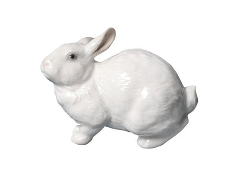 Big-eared white rabbit