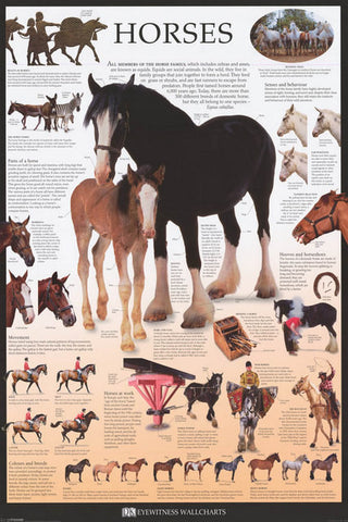 Horses Infographic Poster