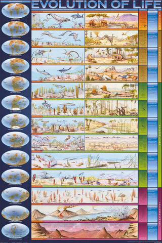 Evolution of Life Infographic Poster