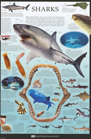 Sharks Facts and Types Dorling Kindersley 24x36 Poster