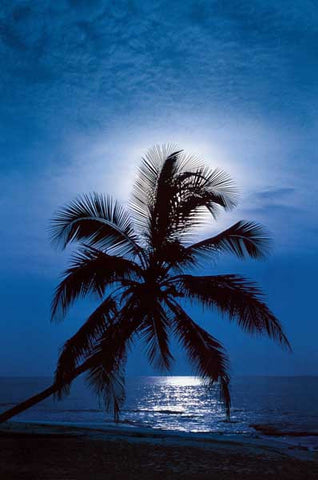 Palm Tree Full Moon Beach Poster