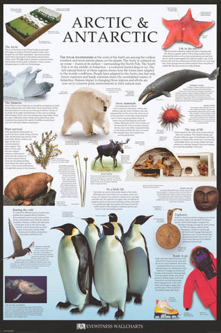 Arctic and Antarctica Animals Poster
