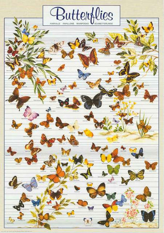 Butterflies Lepidoptera Insect Poster