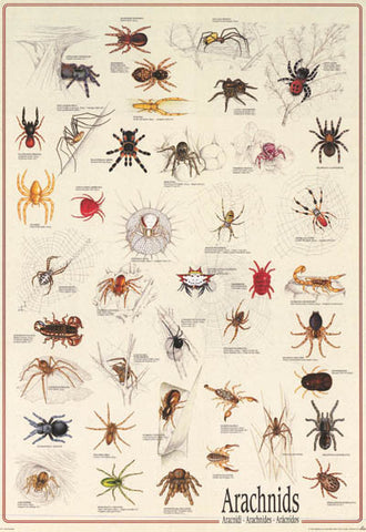 Spiders Arachnids Infographic Poster