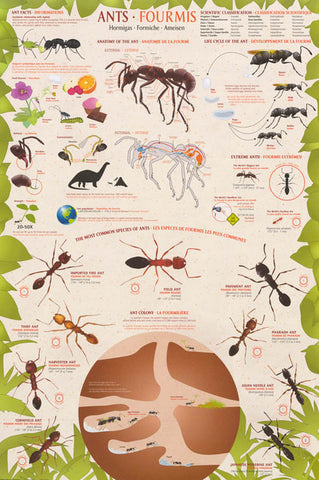 Ants Formicidae Infographic Poster