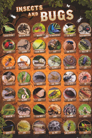 Insects and Bugs Infographic Poster