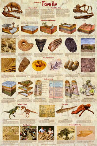 Dinosaur Fossils Infographic Poster