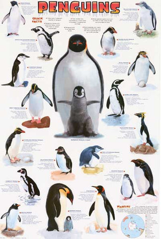 Penguins Infographic Poster