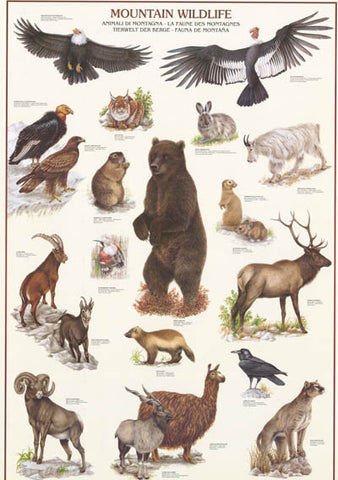 Mountain Wildlife Animal Poster