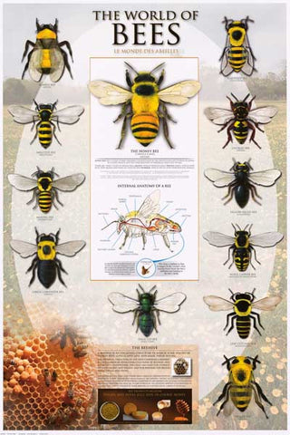 Bees Beekeeping Infographic Poster