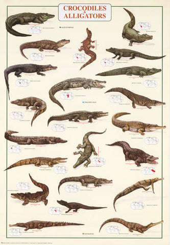 Crocodiles and Alligators Reptiles Poster