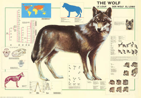 The Wolf Animal Poster