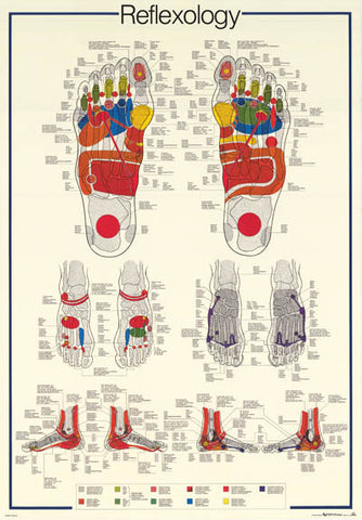 Reflexology Foot Massage Anatomy Poster