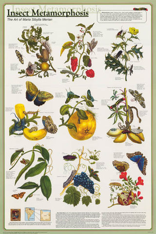 Insect Metamorphosis Poster