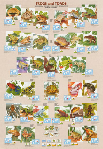 Frogs Toads Amphibians Infographic Poster