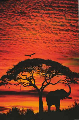 African Elephant and Tree Sunset Poster