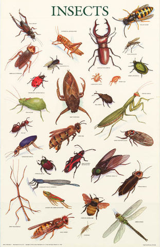 Insects Bugs Entomology Poster