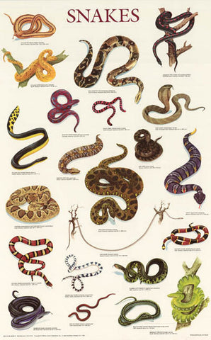Snakes Reptile Infographic Poster