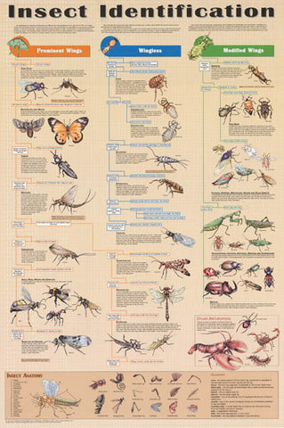 Insect Identification Entomology Poster