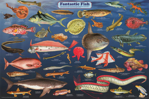 Fantastic Fish Infographic Poster