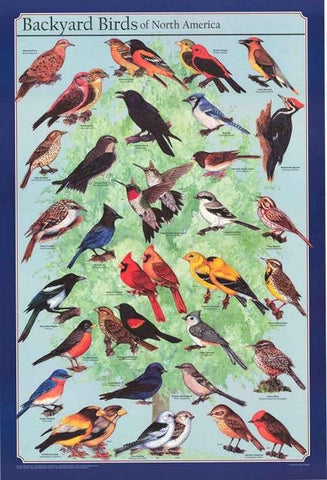 Birds of North America Poster