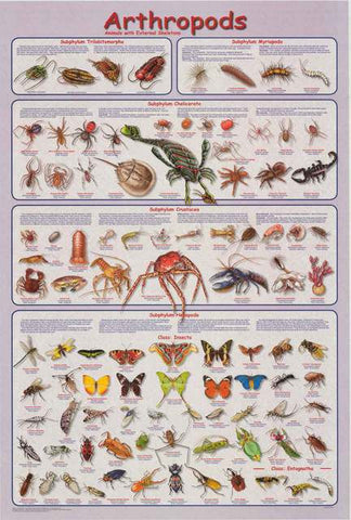 Arthropods Animal Infographic Poster