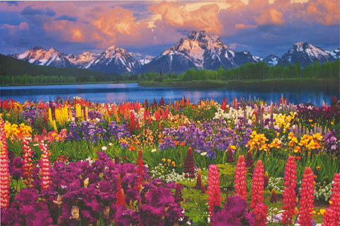 Grand Teton Mountain Wildflowers Poster