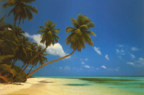 Maldives Tropical Island Beach Poster