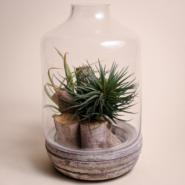 Vintage - Air Plant in Terrarium - Bloom Couture