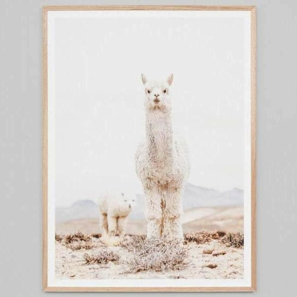 Middle of Nowhere | Framed Print Curious Llama | Shut the Front Door