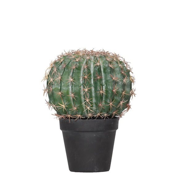 General Eclectic | Barrel Cactus | Shut the Front Door