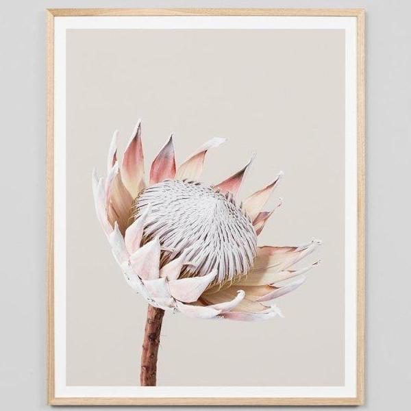 Middle of Nowhere | Framed Print - King Protea | Shut the Front Door