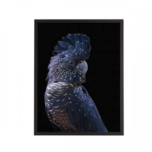General Eclectic | Framed Print Small Black Cockatoo | Shut the Front Door