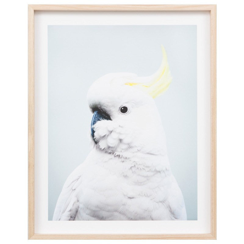 Middle of Nowhere | Framed Print Cockatoo Blue | Shut the Front Door