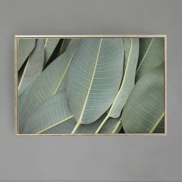 Framed Canvas Print - Nature in Focus