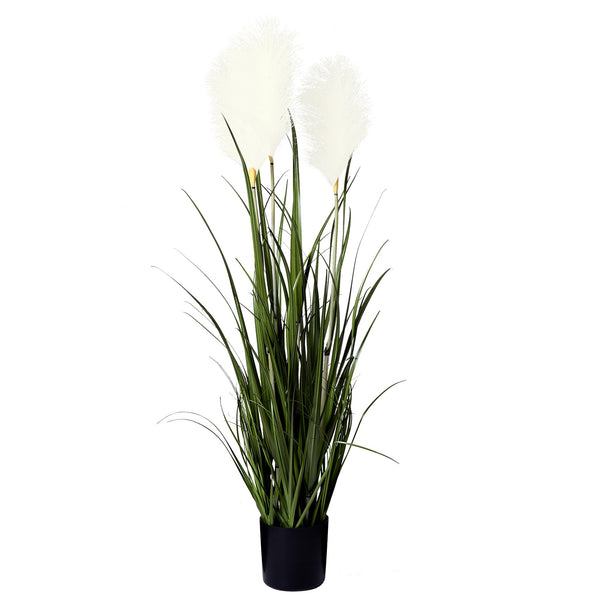 General Eclectic | Pampas Grass | Shut the Front Door
