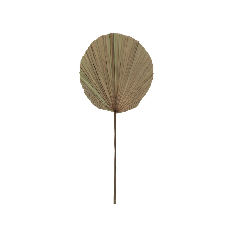 Albi | Dried Cut Fan Palm Stem - Natural | Shut the Front Door