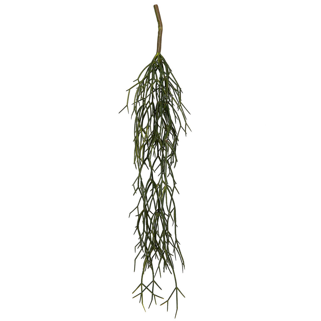 General Eclectic | Mistletoe Cactus Vine | Shut the Front Door