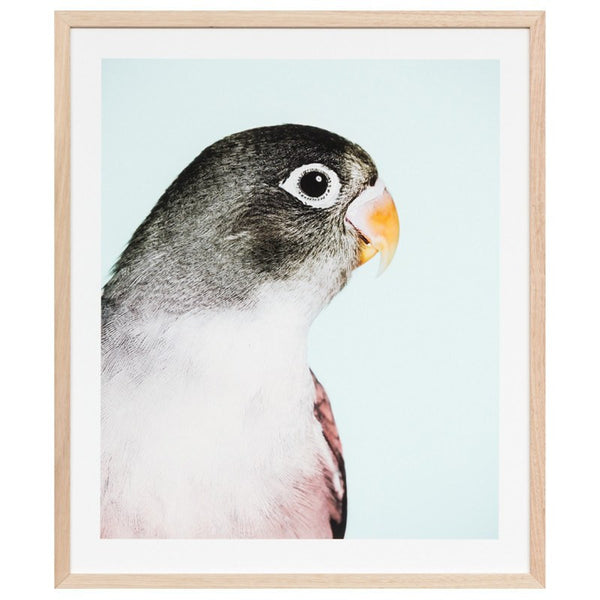Middle of Nowhere | Framed Print Parrot 1 | Shut the Front Door