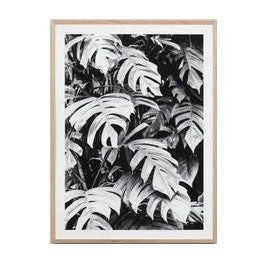 Middle of Nowhere | Framed Print Philodendron | Shut the Front Door
