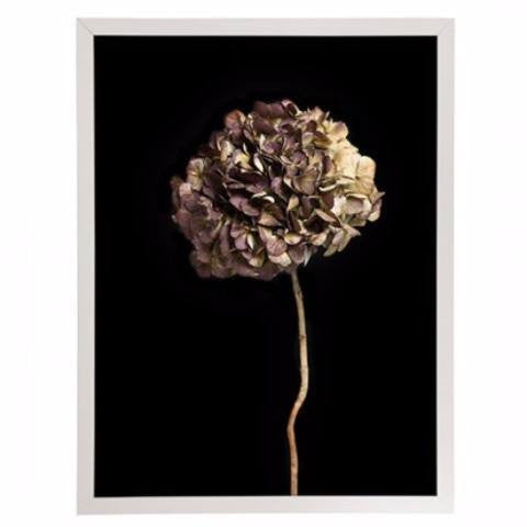 General Eclectic | Framed Print Large Hydrangea on Black | Shut the Front Door