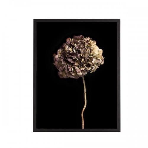 General Eclectic | Framed Print Small Hydrangea on Black | Shut the Front Door