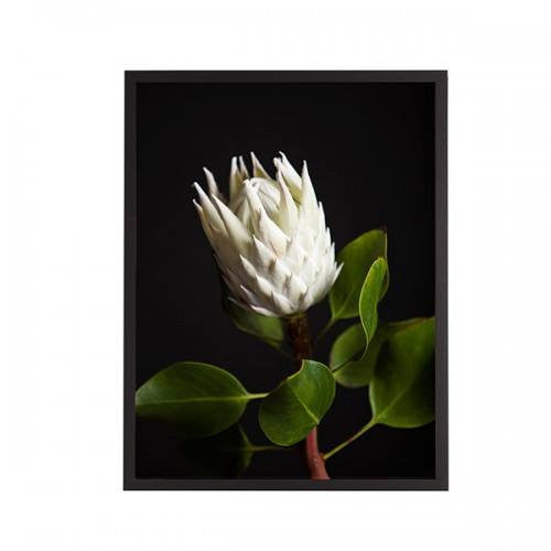 General Eclectic | Framed Print Small Protea | Shut the Front Door