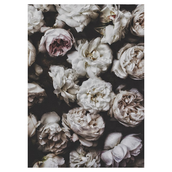 Ixxi | IXXI Artwork Peony Roses 80x100cm | Shut the Front Door