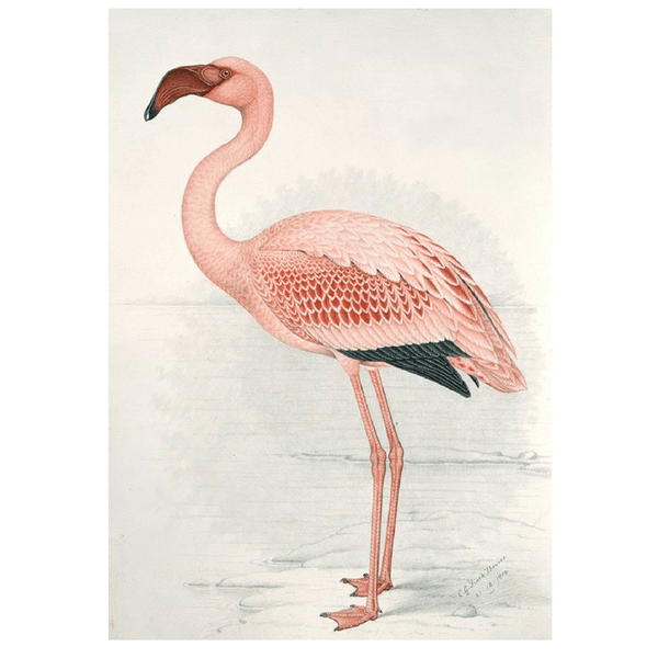 Ixxi | IXXI Artwork Flamingo Finch-Davies 80x120cm *PREORDER* | Shut the Front Door