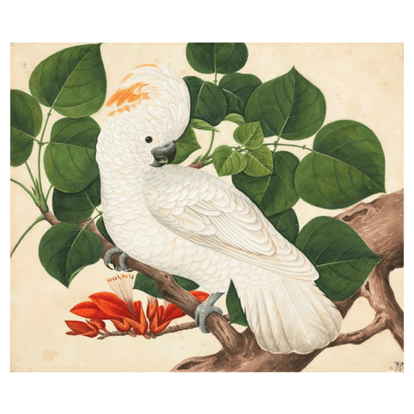 Ixxi | IXXI Artwork Cockatoo 100x80cm *PREORDER* | Shut the Front Door