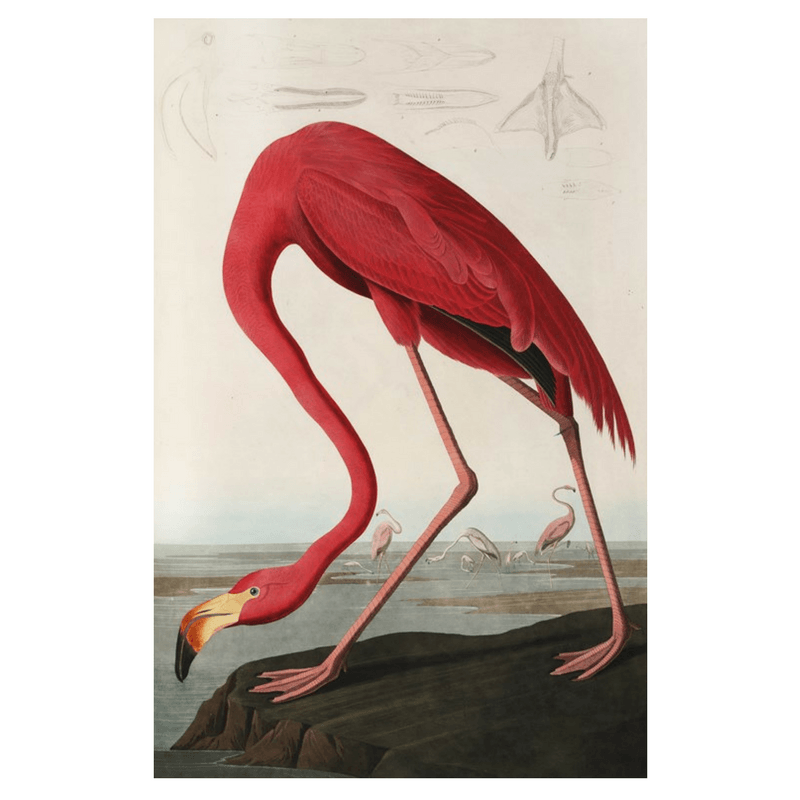 Ixxi | IXXI Artwork Flamingo Audubon 80x120cm | Shut the Front Door