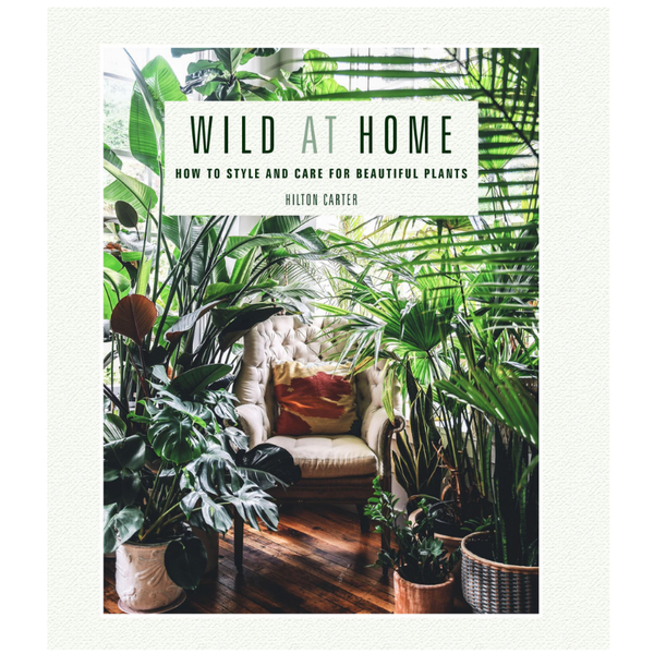 CICO | Wild At Home | Shut the Front Door
